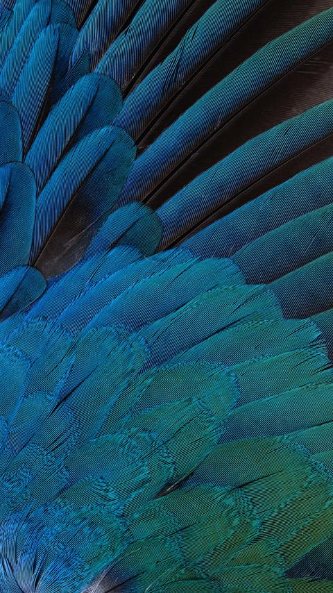 Blue-Bird_2017-09-06-2.jpg