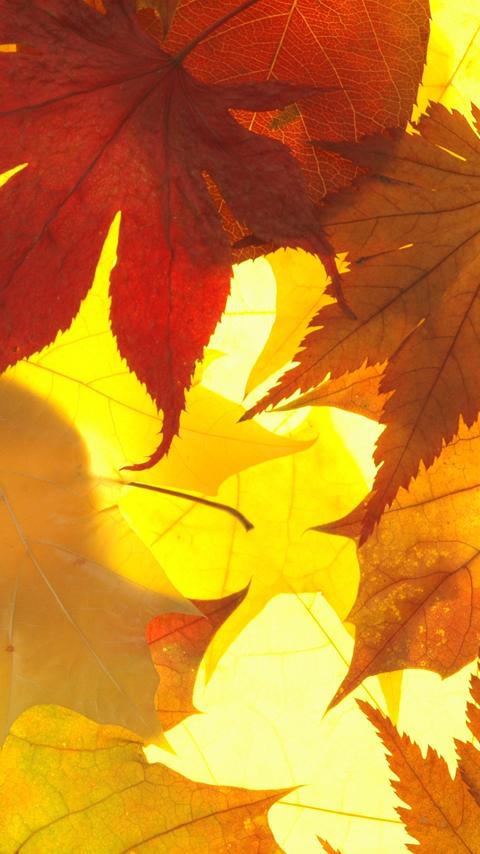 Leaves_2017-09-06.jpg