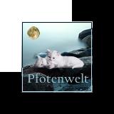 Pfotenwelt's Avatar